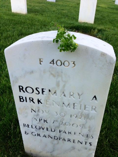 Rosemary's Shamrocks on her side